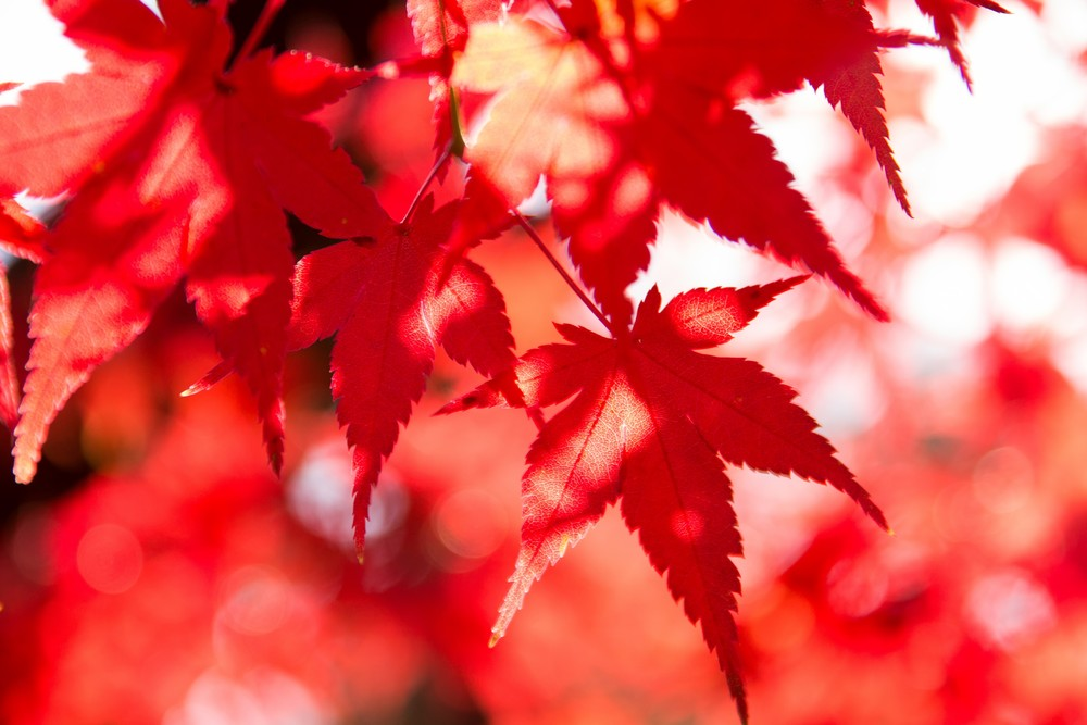 【食欲の秋企画】久々!実写動画やりますよ!
